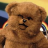 iambungle